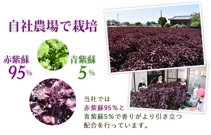 自社農場でつくられた赤紫蘇と青紫蘇を配合
